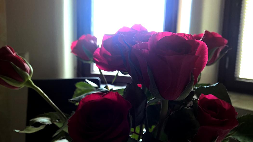 jiro_dreams_sushi_unelmat_ruusu_rose03