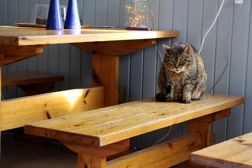 Niihaman retkeilymaja ja kissa