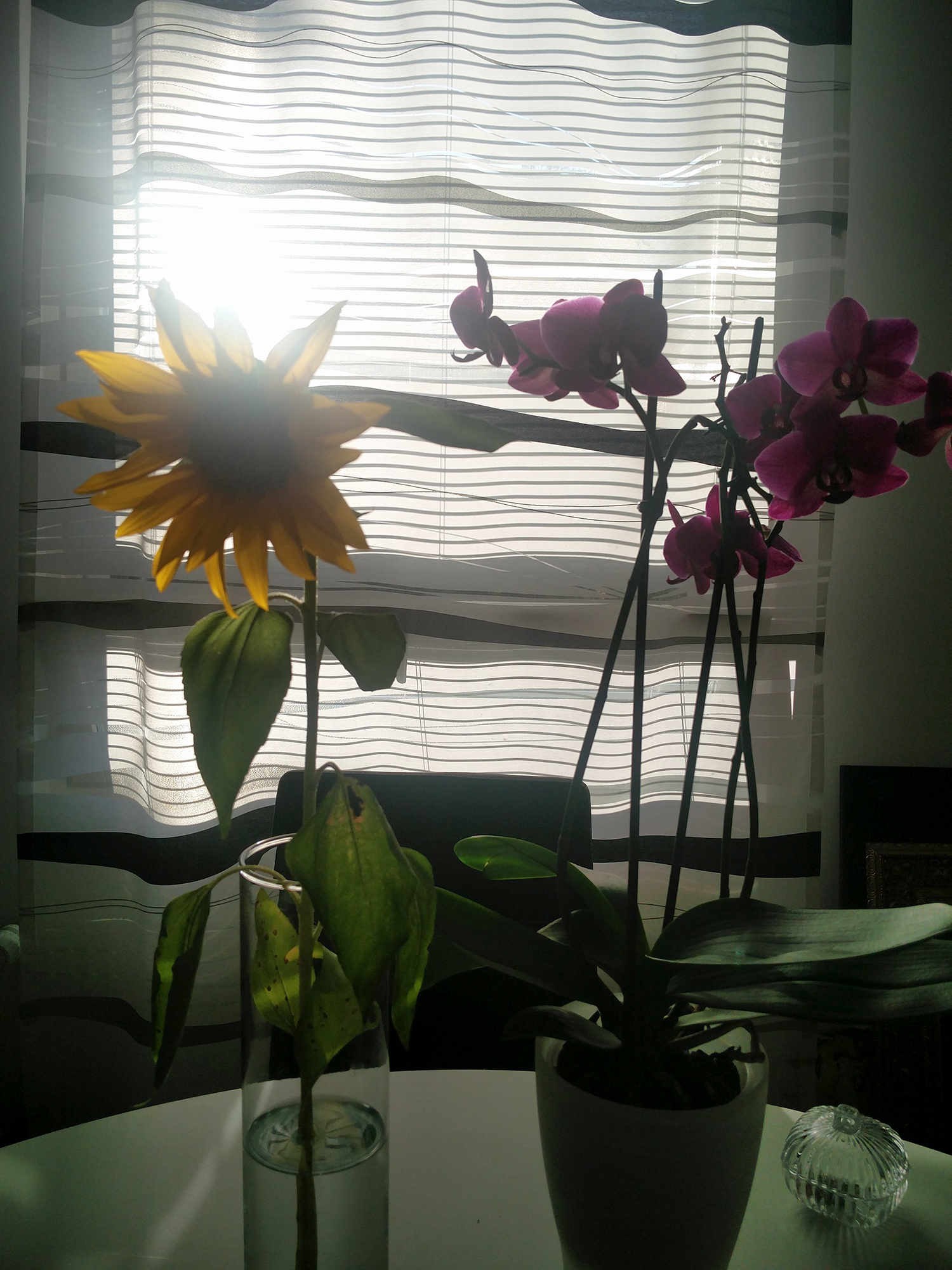 penkkisanky_orkidea_auringonkukka_mustavalko_sisustus_2