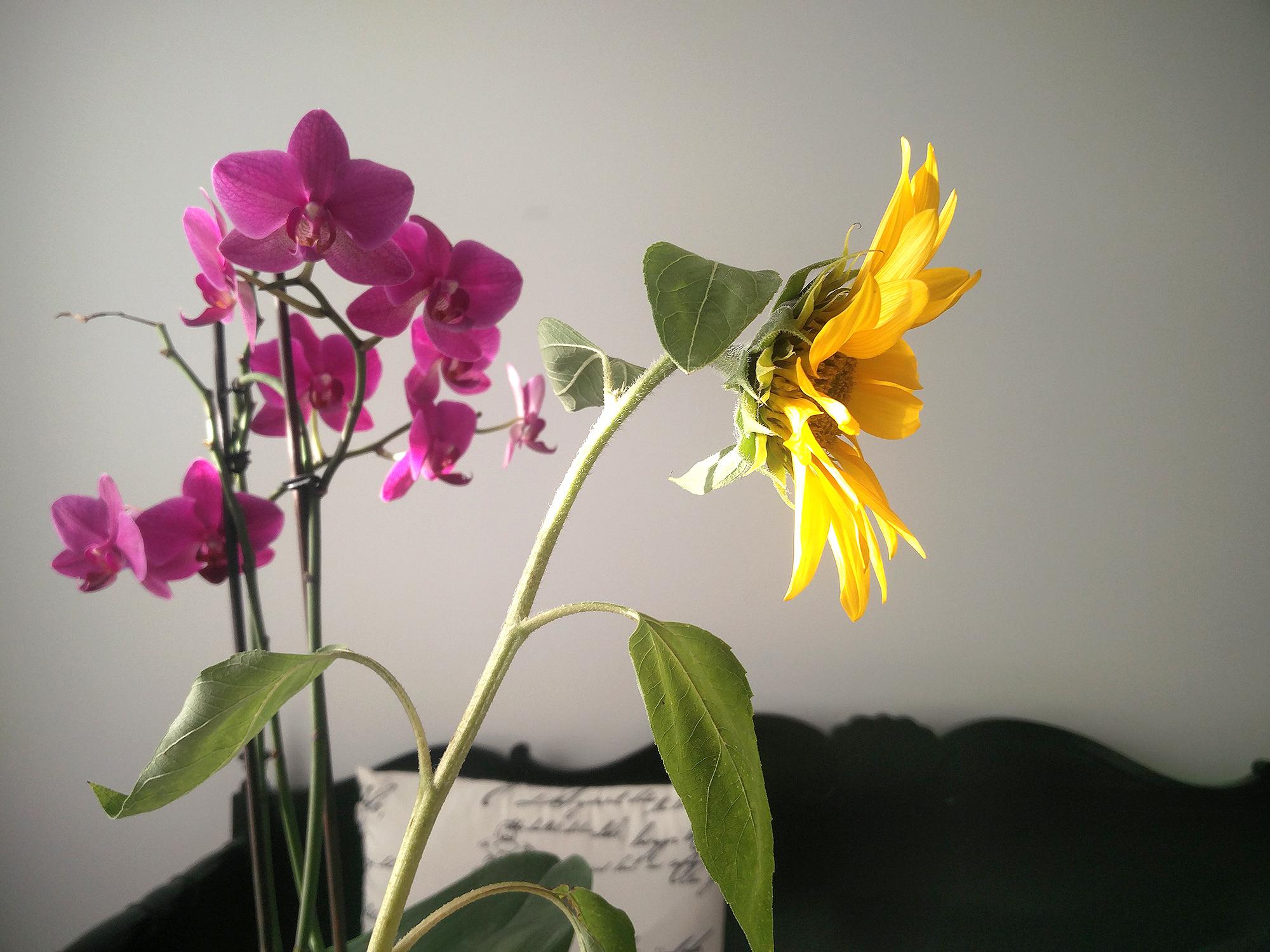 penkkisanky_orkidea_auringonkukka_mustavalko_sisustus_3