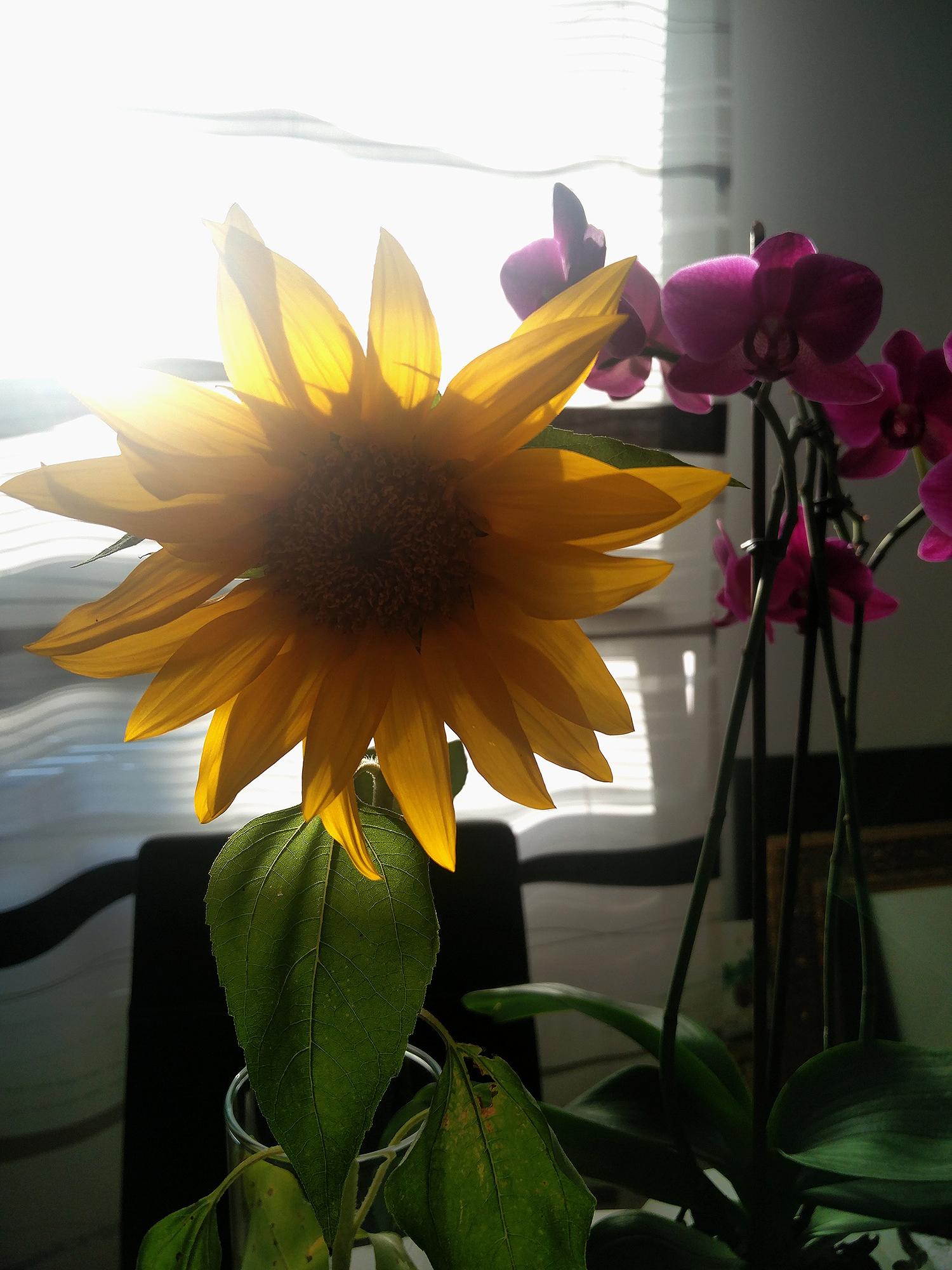 penkkisanky_orkidea_auringonkukka_mustavalko_sisustus_4