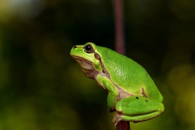Sammakko ja skorpioni - pahuus